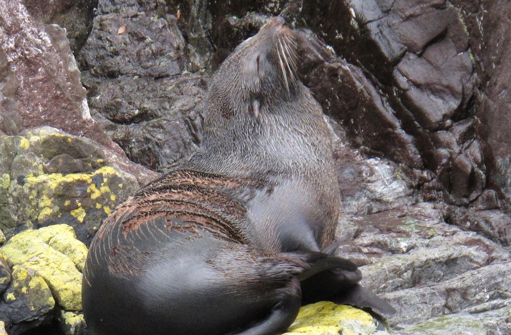sealsound