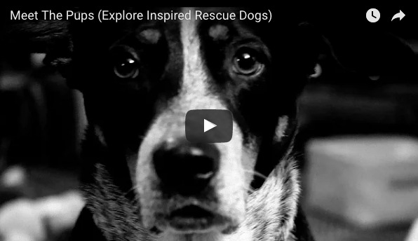 Introducing Explore Inspired's Rescue Dog Resource Series