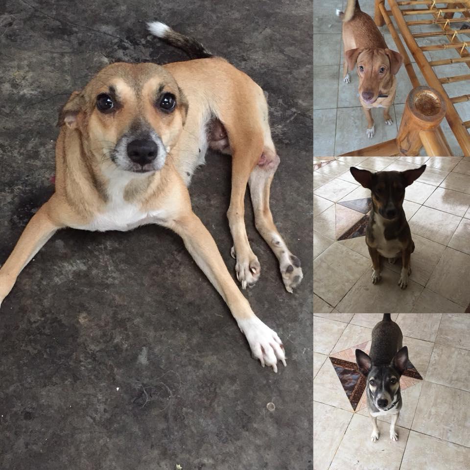 Haiti Street Dog Project #GivingTuesday