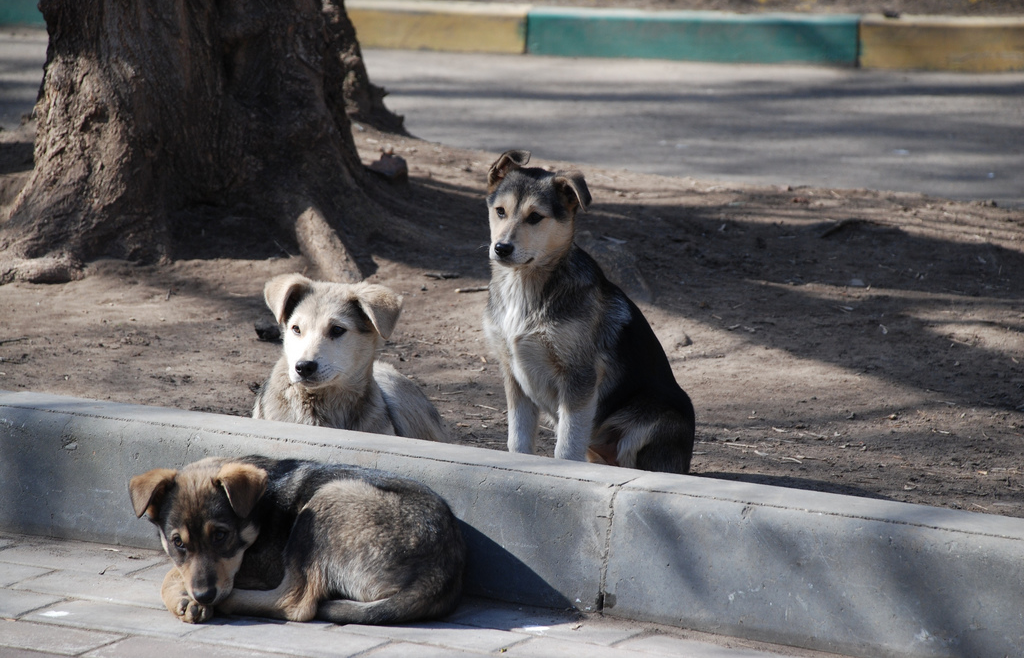 3 Ways to Help Dogs in South America - Explore Inspired
