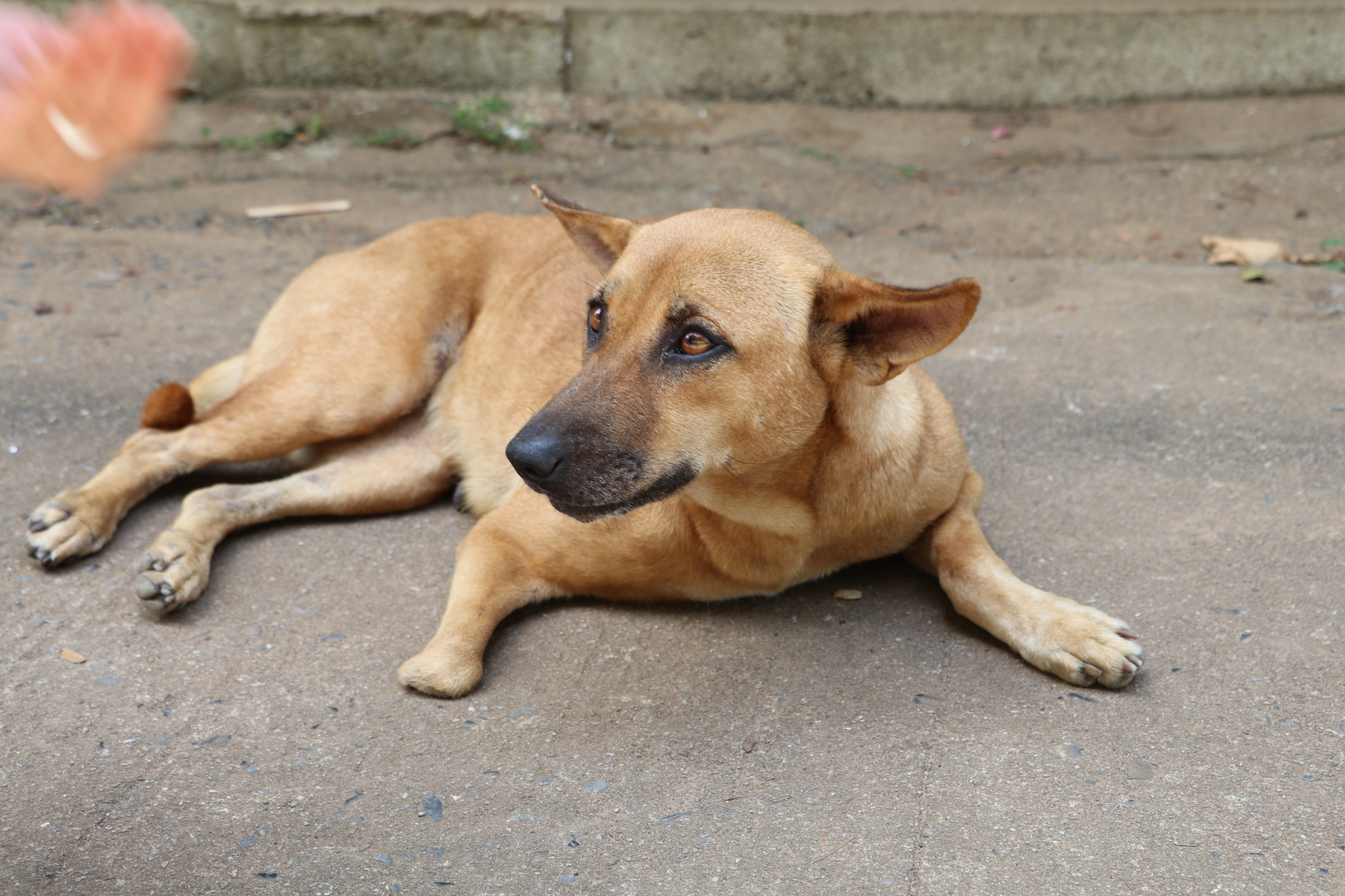 52ff29f27e75 3 Simple Ways To Help A Stray Dog Or Cat You See While Traveling ...