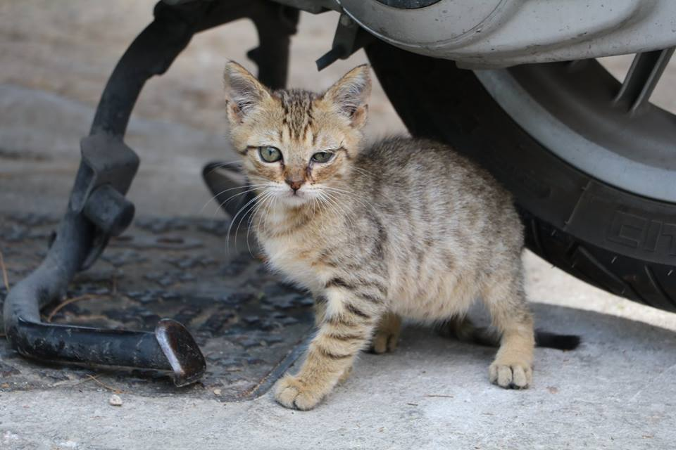3 Simple Ways To Help A Stray Dog Or Cat You See While